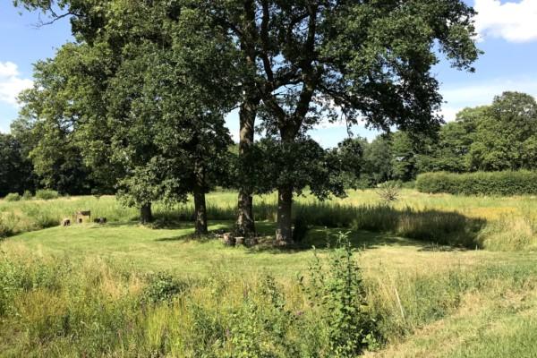 Landgoed De Zonnebloem _ Groen Kamperen _ Engelen Eiland .1